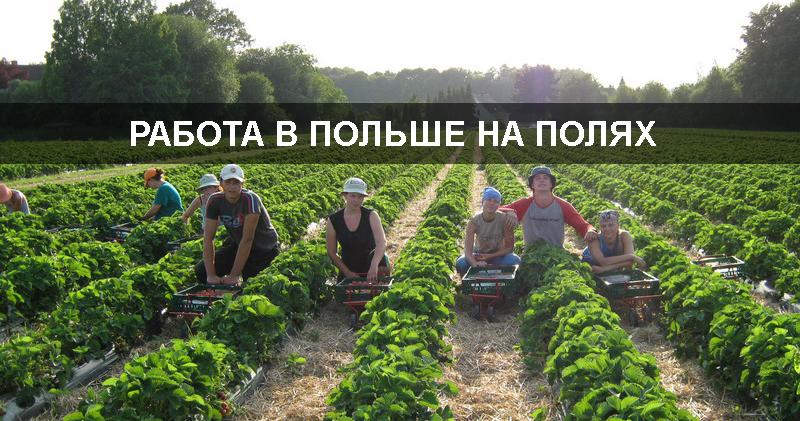 работа в Польше на полях